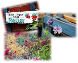 "Group of photos showing flowers and a sign saying ""home grown tastes better"""